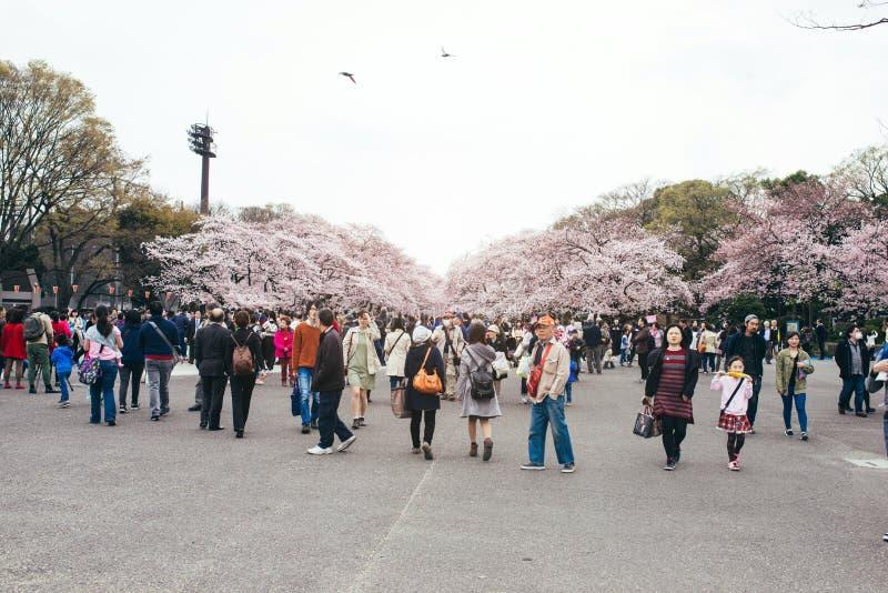 东京,日本- 2016年4月1日, :享受樱花节日的东京人群在上野公园 库存图片