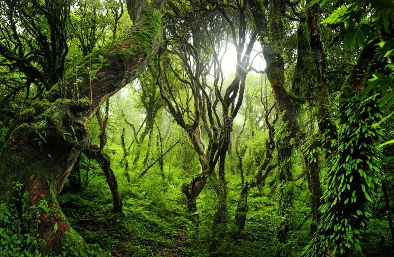 东南亚深密林 库存图片