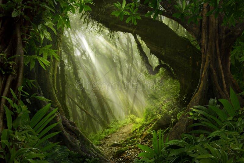 东南亚深密林 库存照片