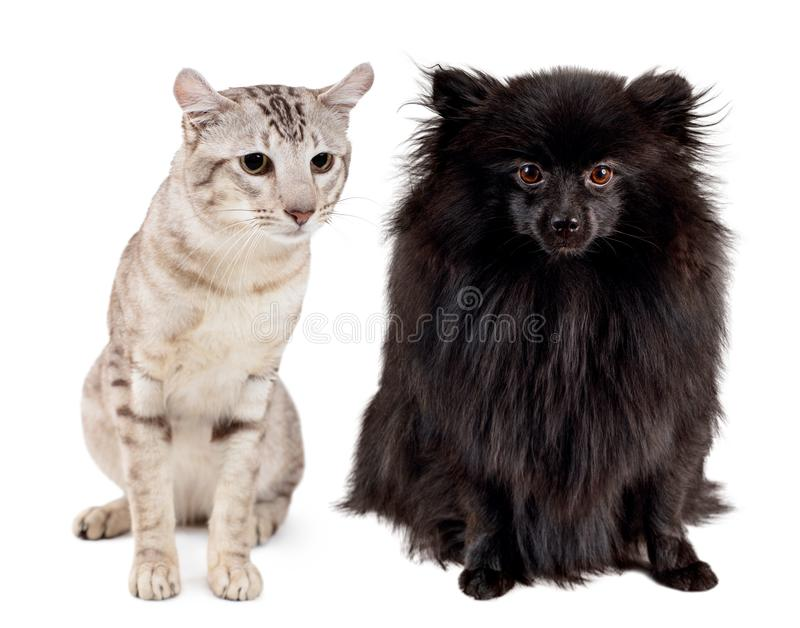 东方平纹点的猫和黑德国波美丝毛狗拼贴画  免版税库存图片
