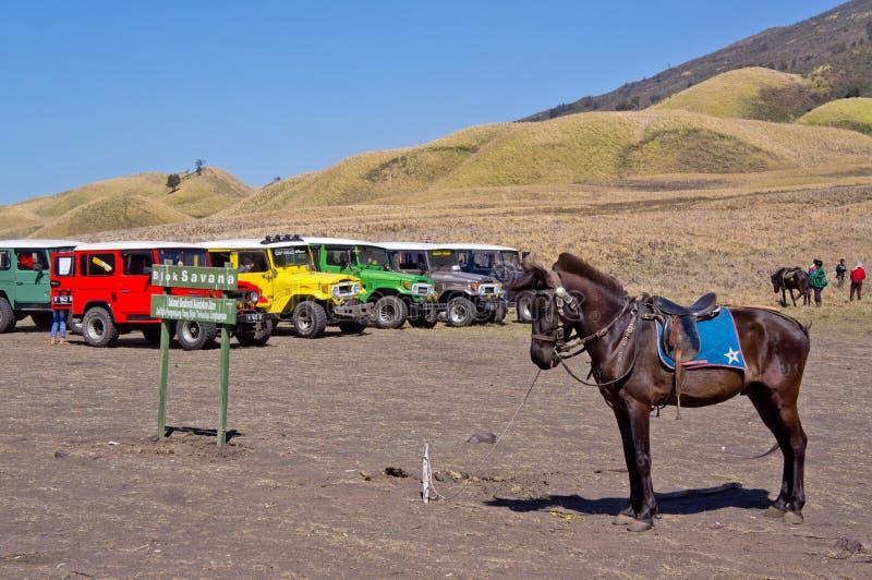 东爪哇省, INDONESIA-NOV 21 :五颜六色的吉普和一匹马在Blok savana在日出在Bromo腾格尔塞梅鲁火山国家公园点燃 免版税库存照片