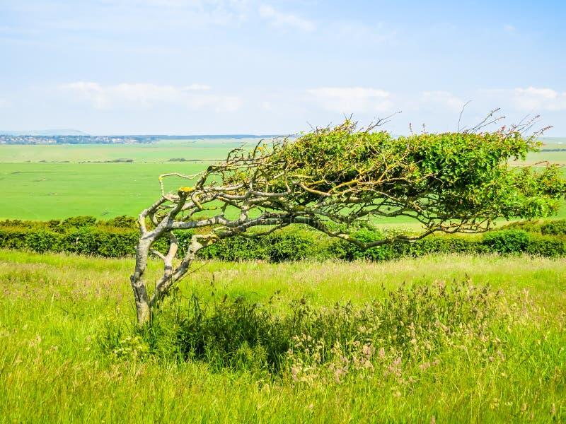 东萨塞克斯郡,英国风景  免版税图库摄影
