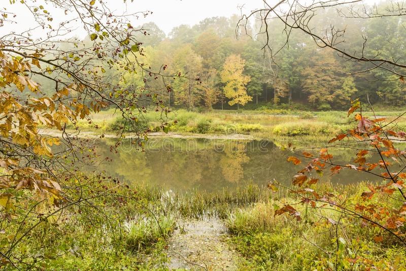 东部分支特拉华有雾的早晨 库存图片