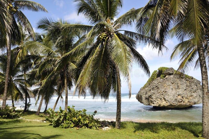 东部巴布达加勒比的海岸 免版税库存照片