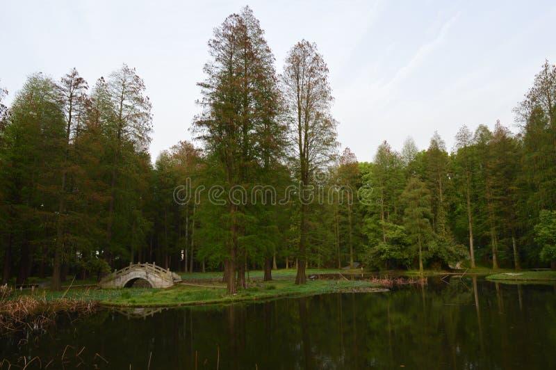 东部湖Mt 山风景区 免版税库存图片