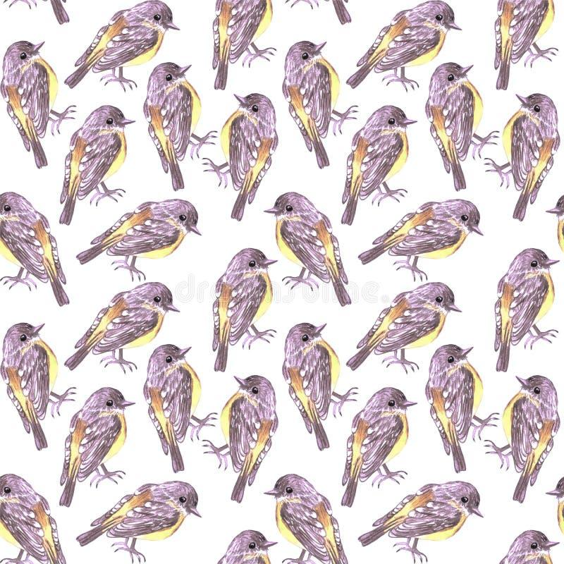 东部黄色知更鸟或绘背景的Eopsaltria极光鸟无缝的水彩鸟 库存例证