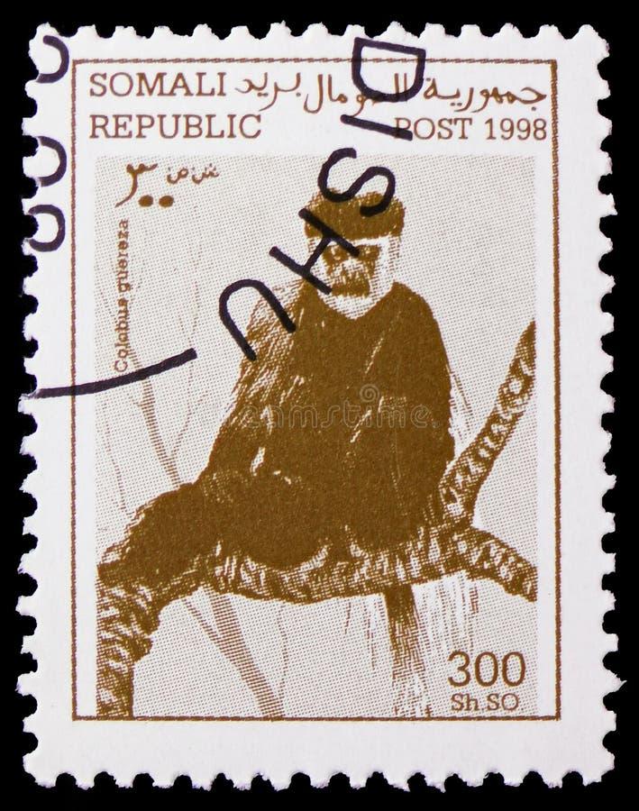 东部黑白疣猴疣猴guereza,索马里serie,大约1998年 免版税库存图片
