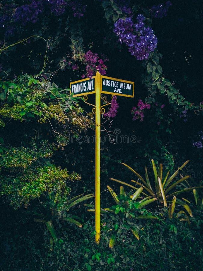 丢失在一个不可思议的都市森林里 库存照片