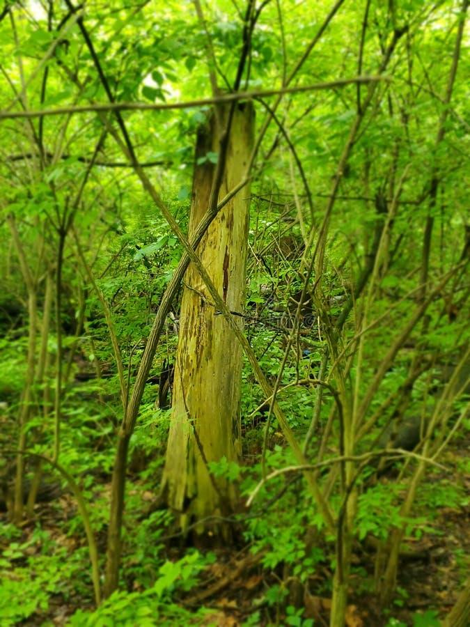 丢失在森林 库存照片