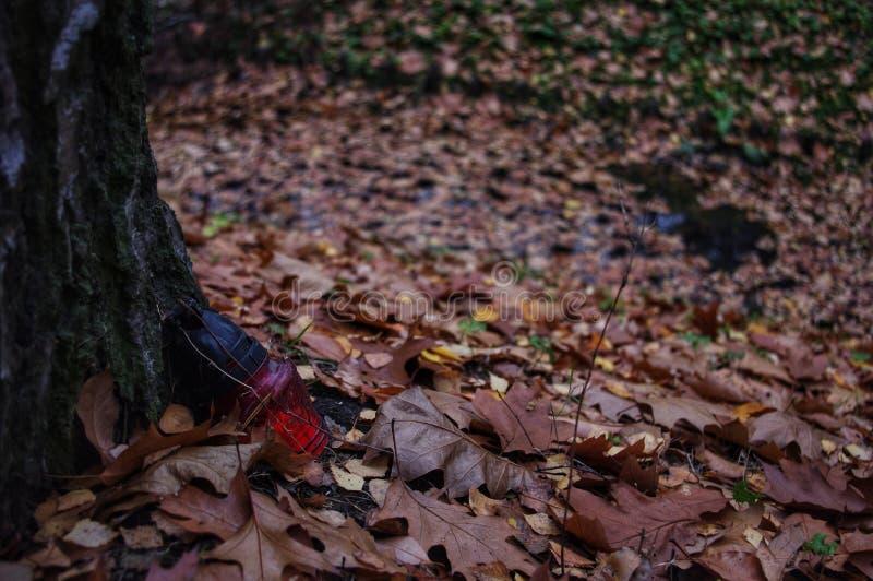 丢失的森林 免版税库存图片
