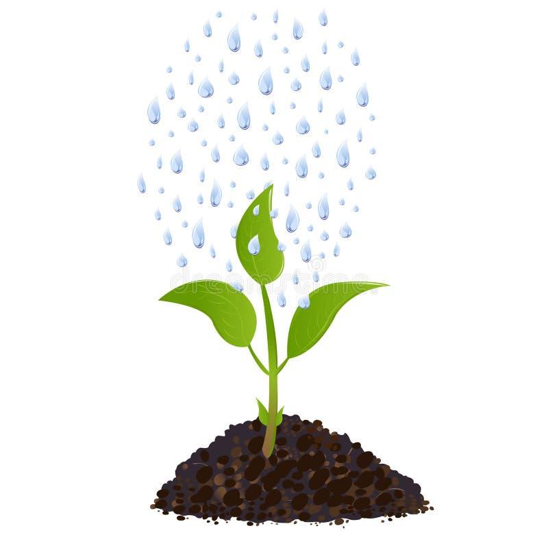 丢弃绿色植物雨向量年轻人 皇族释放例证
