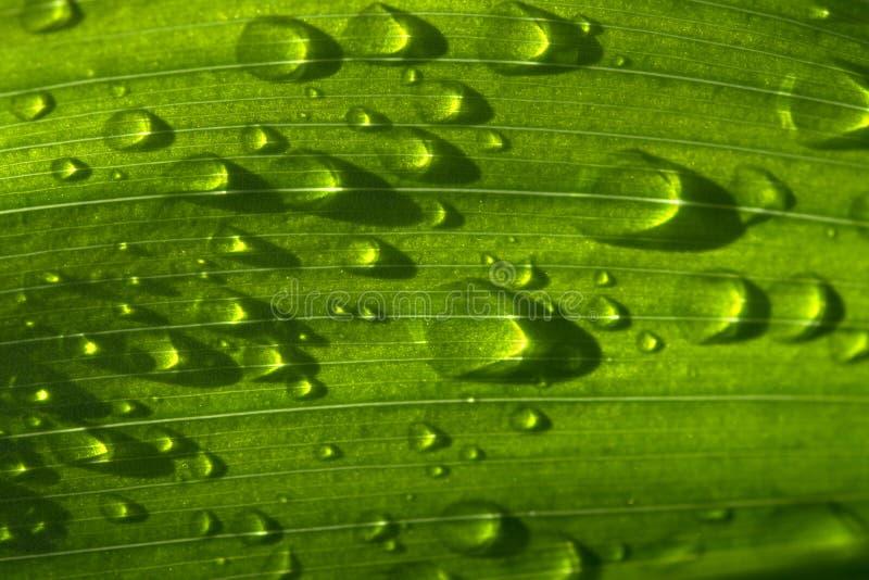 丢弃草绿色雨 库存图片