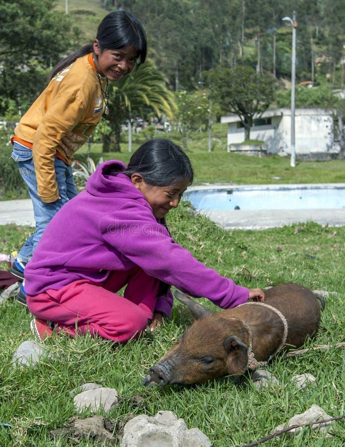 两三个女孩用在Otavalo动物市场之外的一个小猪在Otavalo在厄瓜多尔 库存照片