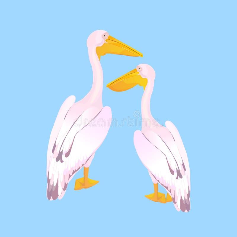 两三桃红色鹈鹕 ?? 与一张长的票据的一大群居waterbird 库存例证