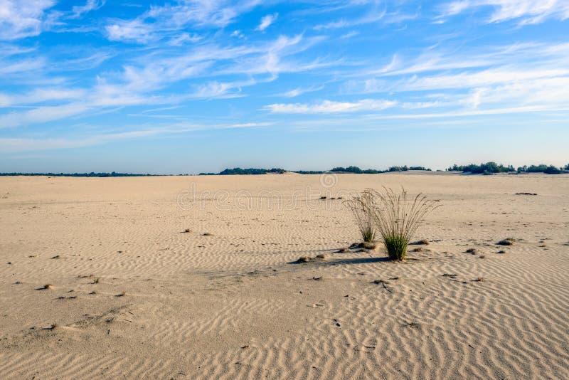两丛草在desertlike广域 免版税库存图片