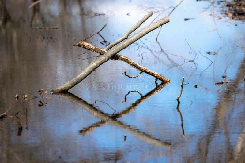 两个交错的下落的分支在一个镇静森林池塘的波浪形成信件x,并且反射 免版税库存图片