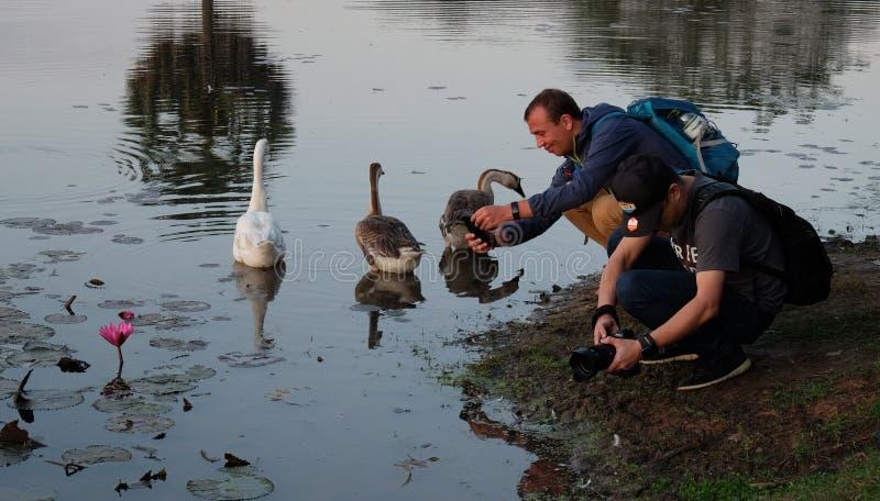 两个人为在池塘的莲花照相 游人做照片美丽的植物 免版税库存图片