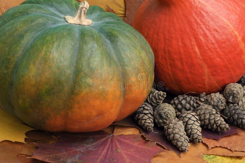 两个以干燥秋叶为背景的多彩多姿的南瓜特写镜头与杉木锥体 库存图片