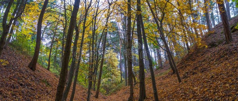 两个倾斜全景在各种各样的种类秋天森林里  免版税库存照片