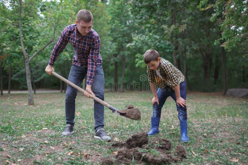 两个兄弟开掘地球在种植的年轻树一个公园 家庭工作,秋天天 免版税库存图片