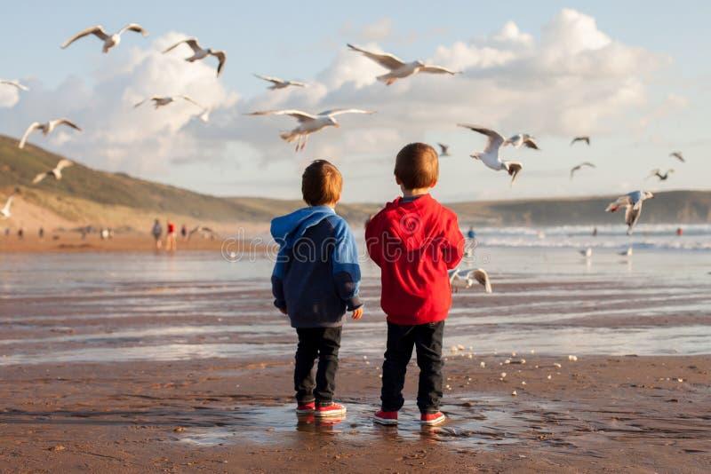 两个可爱的孩子,喂养在海滩的海鸥 免版税库存照片