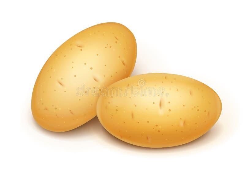 两个土豆 有用的菜 r 皇族释放例证