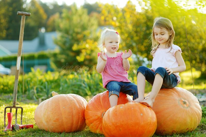 两个妹坐在南瓜补丁的巨大的南瓜 采摘南瓜的孩子在国家农场在温暖的秋天天 免版税库存照片