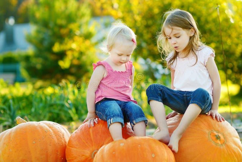 两个妹坐在南瓜补丁的巨大的南瓜 采摘南瓜的孩子在国家农场在温暖的秋天天 库存照片