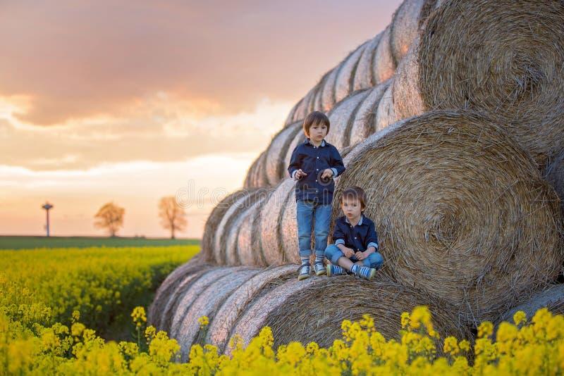 两个孩子,油菜子的男孩兄弟调遣,坐a 免版税库存照片