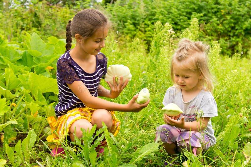 两个小女孩在收获新鲜的南瓜的庭院里 免版税图库摄影