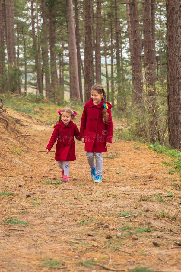 两个小女孩,两个姐妹在杉木森林里走 免版税图库摄影