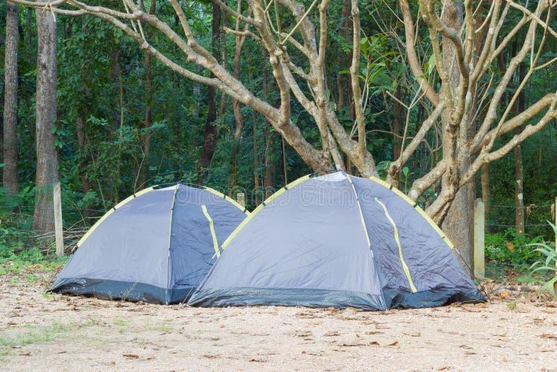 两个帐篷在羽毛树在国家公园,水平的p下 库存照片
