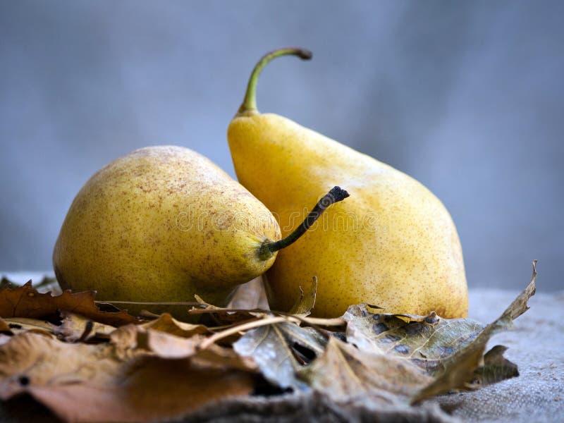 两个成熟黄色梨在桌里 免版税库存照片