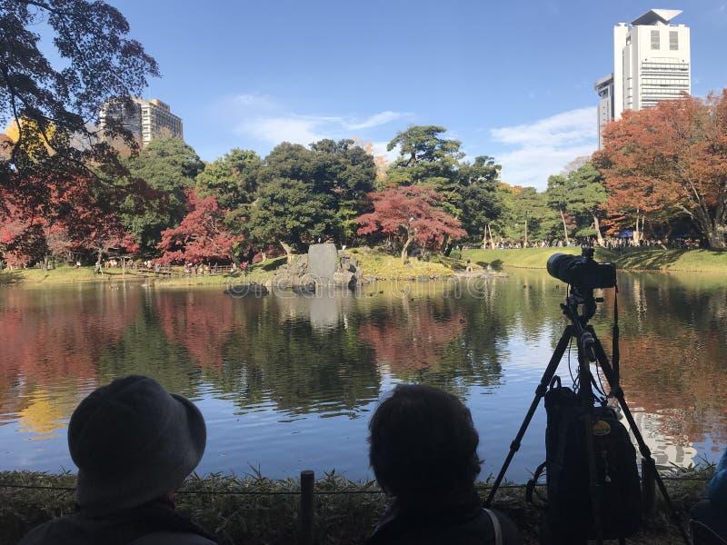 两个日本夫人是坐和拍美妙的红槭的照片 免版税库存照片