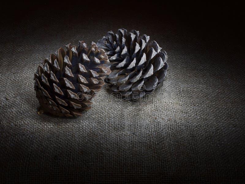 两个杉木锥体,接触,黑暗的静物画 轻的绘画 库存图片