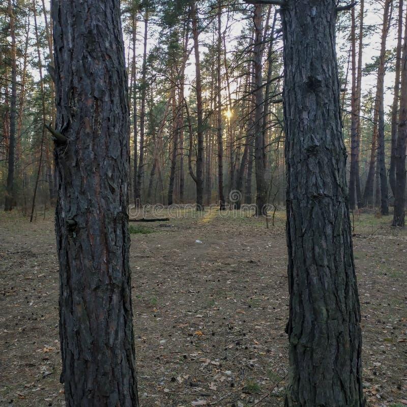 两个树干作为框架 免版税库存图片