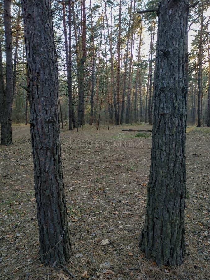 两个树干作为框架 免版税图库摄影