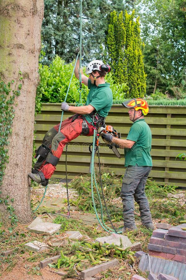 两个树木栽培家在树在庭院里 库存照片