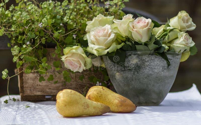 两个梨和白色姿势 免版税库存图片