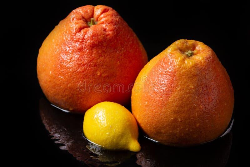 两个湿葡萄柚和一个柠檬在水中,与反射,与下落在果皮,新鲜的水多的果子的概念 库存图片