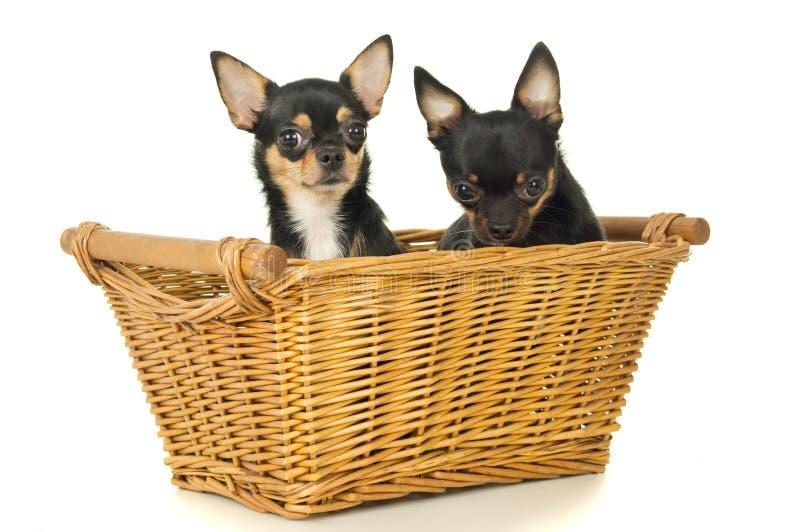 两个狗成人坐 图库摄影