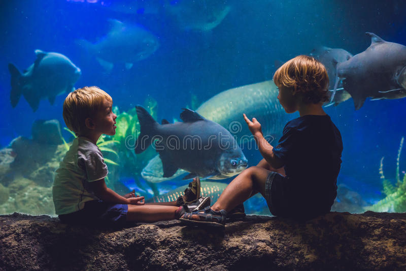 两个男孩看在水族馆的鱼 库存照片