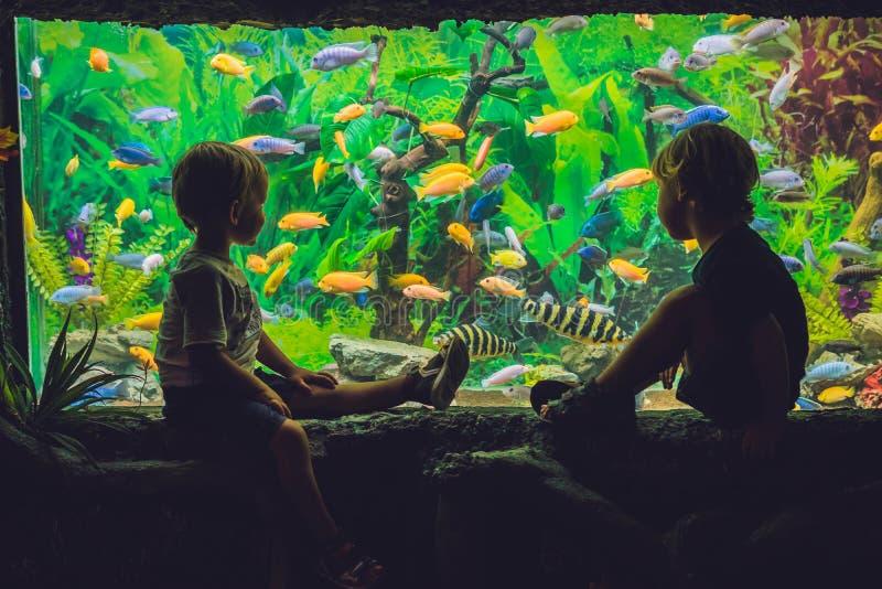 两个男孩看在水族馆的鱼 库存图片