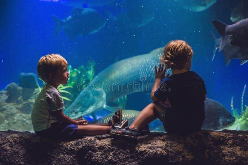 两个男孩看在水族馆的鱼 免版税库存照片