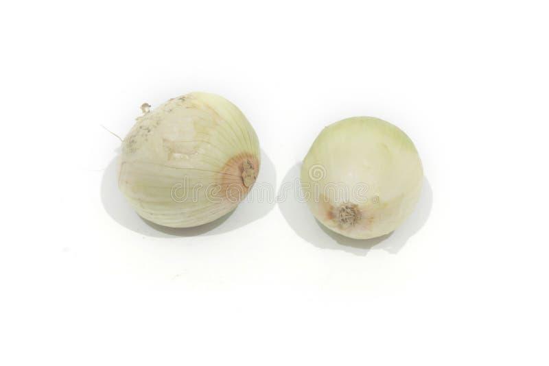 两个白洋葱隔绝了背景 免版税库存图片