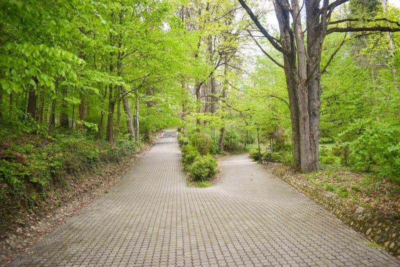 两个胡同的交叉点在树和灌木中的公园 大胡同在两条更小的道路splitted 一个胡同上升  免版税图库摄影