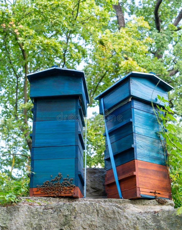 两个蓝蜂蜂箱,蜂鸣 免版税图库摄影