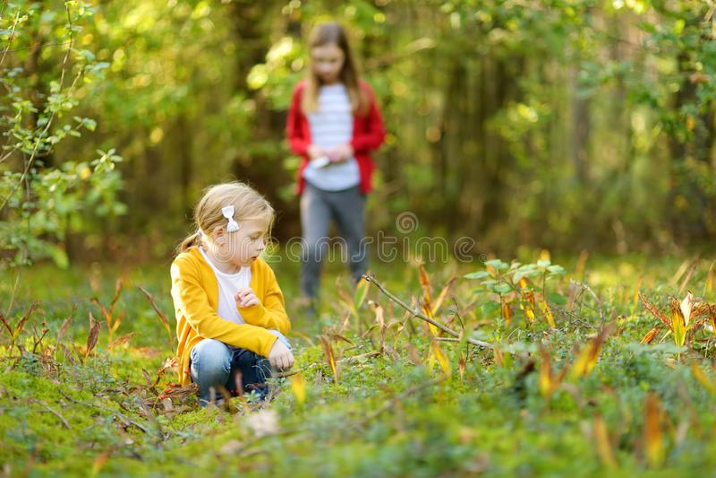 两个逗人喜爱的年轻姐妹获得乐趣在森林远足期间在美好的夏日 探索自然的孩子 活跃家庭休闲 图库摄影