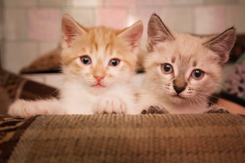 两个逗人喜爱的矮小的灰色红头发人坐沙发在屋子里 免版税库存照片