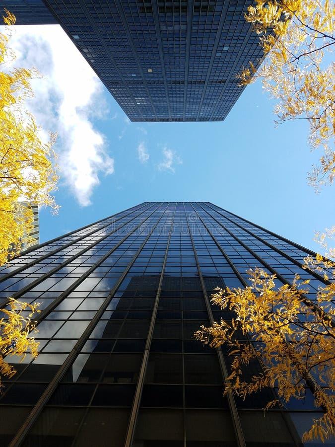 两个面对的摩天大楼在有黄色树的中间地区 免版税库存照片